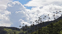Private Tour: Cocora Valley and Ocaso Coffee Tour, Salento, Private Sightseeing Tours