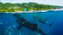 Canyoning avec observation de requins-baleines, Cebu, Day Cruises