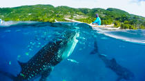 Oslob Whaleshark and Kawasan Falls Tour - SHARED TOUR, Cebu, Attraction Tickets
