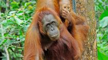 WILDLIFE SANCTUARIES, Sandakan, Day Trips