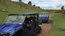 Off-Road 4WD Buggy Adventure from Rotorua , Rotorua, 4WD, ATV & Off-Road Tours
