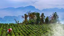 Find out the green tea secret, Chengdu, Cultural Tours