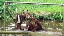 Orangutan & Charcoal Factory Tour, Penang, Day Trips