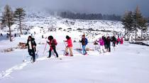 Mt. Etna Snowshoe Hike with Transport from Catania, Catania, Ski & Snow