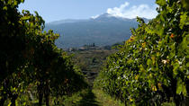 Etna and Wine Tour from Catania, Catania, Half-day Tours
