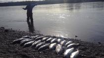 Kenai River Alaska Fishing Charter, Soldotna, Fishing Charters & Tours