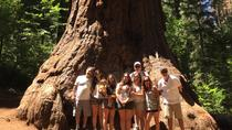 4x4 off-roadtour reuzensequoia's, Yosemite National Park, 4WD, ATV & Off-Road Tours