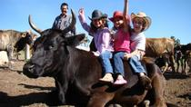 Full-Day Ranch Adventure and Horseback Riding Tour, San Miguel de Allende, Horseback Riding