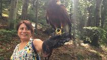 Medvednica Falconry Tour from Zagreb, Zagreb, Nature & Wildlife