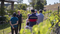 Sirromet Wines Tour and Tasting , Queensland, Wine Tasting & Winery Tours