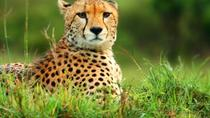 Kruger National Park Overnight Guided Safari Tour from Johannesburg , Johannesburg, Overnight Tours