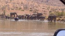 Pilanesberg National Park Day Tour from Pretoria, Pretoria, Safaris