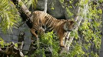 Bioparc Fuengirola Entrance and Lunch, Costa del Sol, Theme Park Tickets & Tours