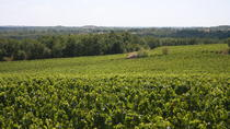 Gaillac wine tour from Toulouse half day, Toulouse, Wine Tasting & Winery Tours