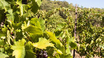 St Emilion Half-Day Trip from Bordeaux