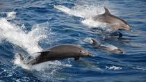 Puerto Princesa Dolphin Watching Tour, Puerto Princesa, Dolphin & Whale Watching