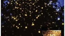 Puerto Princesa Firefly Watching Tour, Puerto Princesa, Cultural Tours