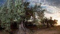 Zaragoza olive oil tour & Visit to Belchite town, Zaragoza, Day Trips