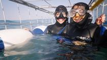 Full-Day Private Great White Shark Cage Diving and Wine Tasting Experience from Cape Town, Cape...