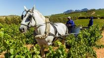 ORGANIC & BIODYNAMIC SUSTAINABLE WINE EXPERIENCE, Cape Town, Sustainable Tours