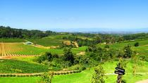 Private Half Day Wine Tour in Constantia from Cape Town, Cape Town, Wine Tasting & Winery Tours
