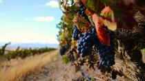 Red Wine Lovers Private Tour from Cape Town , Cape Town, Wine Tasting & Winery Tours
