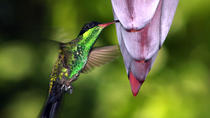Rockland Bird Sanctuary Tour from Montego Bay, Montego Bay, Private Sightseeing Tours