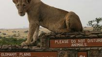Tour mit Nairobi Nationalpark, Elefantenwaisenhaus, Giraffen-Center, Bomas of Kenya und Karen ...