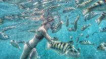 Blue Lagoon Snorkeling, Kuta, 4WD, ATV & Off-Road Tours