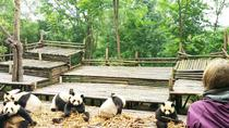 Chengdu Highlights Small-Group Day Tour of the Panda Research Base and the Leshan Giant Buddha,...
