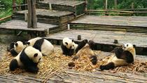 Chengdu Panda Base Tour and More As Your Wish, Chengdu, Custom Private Tours