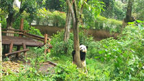 Chengdu Private Panda Trip with Afternoon Private Custom Tour, Chengdu, Day Trips