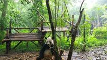 Private Day Tour: Chengdu Giant Panda Breeding Center and Leshan Giant Buddha, Chengdu, City Tours