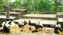 Private Half-Day Chengdu Panda Base Tour, Chengdu, Nature & Wildlife