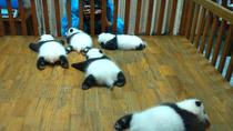 Private Half-Day Chengdu Panda Base Tour