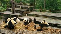 Private Tour: Customize Your Perfect Day in Chengdu, Chengdu, Walking Tours