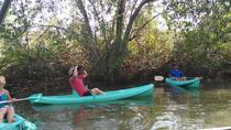 Mangrove Damas Island Kayak Tours, Quepos, Kayaking & Canoeing