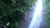 Manoa Waterfalls Run and Hike Tour, Oahu, null