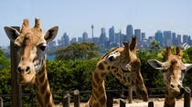 Taronga Zoo Sydney: Eintrittskarte, Sydney, Zoo Tickets & Passes