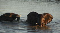 Two Days, One Night Tour: Blyde River to Kruger National Park, Kruger National Park, null
