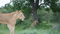 Full-Day Big 5 Safari from Hazyview, Kruger National Park, Safaris