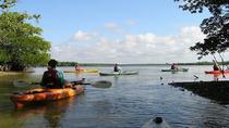 Happy Hour Kayak Tours in Sarasota, Sarasota, Kayaking & Canoeing