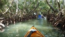 Mangrove Tunnel Kayak Eco-Tour, Sarasota