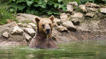 Private Tour from Bucharest to Zarnesti Bear Sanctuary and Dracula's Castle, Bucharest, Private ...