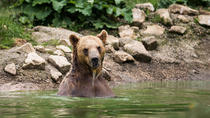 Zarnesti Bear Sanctuary and Dracula's Castle Private Tour, Bucharest, Private Sightseeing Tours