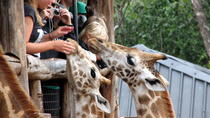 Best Of Nairobi Day Tour, Nairobi, Half-day Tours