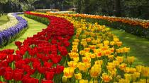 Private Transfer to Keukenhof from Amsterdam, Amsterdam, Private Transfers