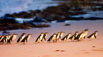 Boutique Intimate Tour to Phillip Island Penguin Parade from Melbourne, Melbourne, Nature & Wildlife