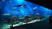 Skip the Line: S.E.A. Aquarium Day Pass Including Hotel Pickup from Singapore, Singapore, ...
