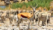 4-Night, Family-Friendly Tour of Etosha from Windhoek, Windhoek, Multi-day Tours